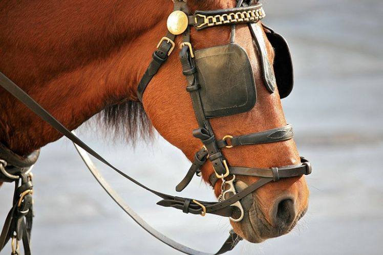 800px-Horse_Blinkers_(4240744343)