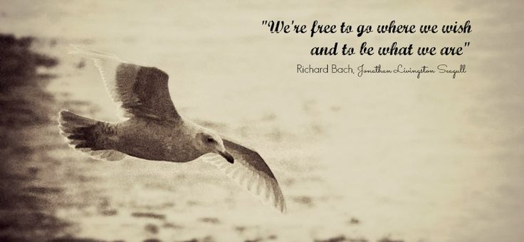 freedom_quote - Jonathan Living Seagull