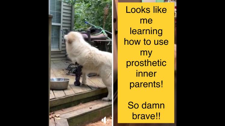 prosthetic inner parents
