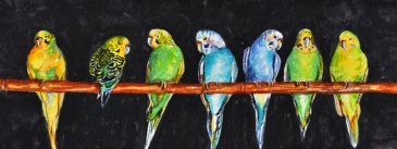7_Little_Parakeets_in_a_Row